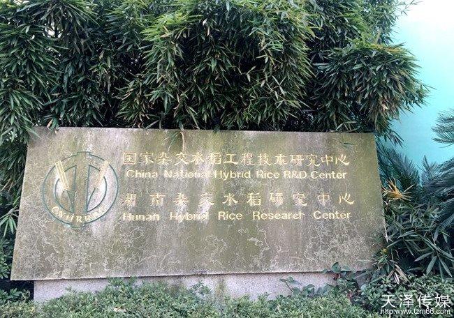 "beplay|娱乐游戏旗下""谷子说""创始人拜会中国""杂交水稻之父""袁隆平"