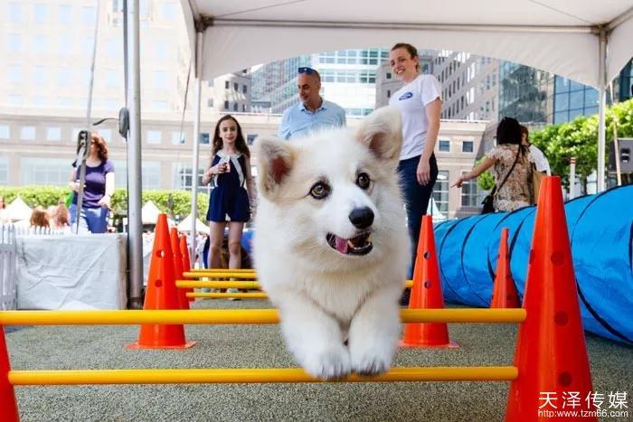 宠物狗活动策划
